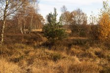 Chobham common Sunningdale End